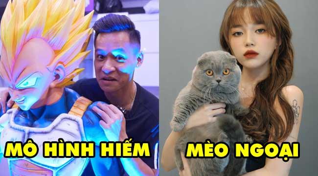 TOP 6 sở thích Bá Đạo của các streamer đình đám Việt Nam: Độ Mixi, Misthy, PewPew